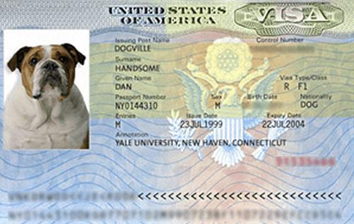 Visa tinified