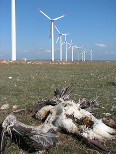 wind_farm_bird_chopper tinified